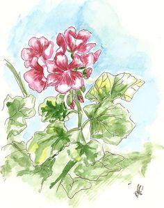 Geranio. Pelargonium. luisa capparotto