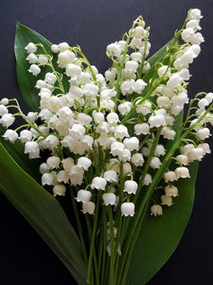 Possible these for the front of the house  Convallaria Majalis 'Lily of the Valley' by May Lis Birchall