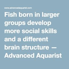 Fish born in larger groups develop more social skills and a different brain structure — Advanced Aquarist | Aquarist Magazine and Blog
