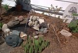 End result, with water fountain statuary, decorative rocks, and plants along the perimeter. A nice addition to my side yard.
