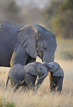 ♥ I LOVE ELEPHANTS!!!
