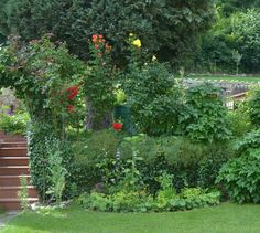 donauluft: the garden in june - Garten Rundgang Juni Scented Geranium, Juni, Edible Garden, Clematis, Geraniums, Outdoor Structures, Plants, Sage, Lawn And Garden