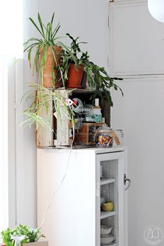 Urban Jungle Bloggers: Kitchen Greens by @oravanpesa