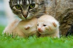 Mother's love...
