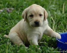 Image result for cutest puppies