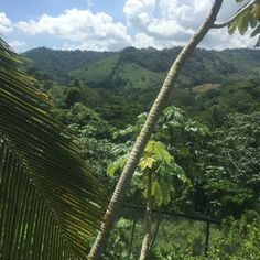 Mountains in punta Cana at monkeyland