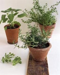 Avoid planting perennials in clay pots, which are more likely to crack if they freeze.