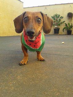 A Bi é a maior simpatia! #patudos #pet #cachorro #dog