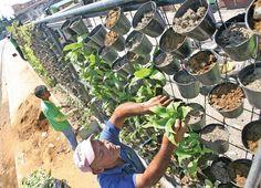 Urban Slum Areas vertical garden plans with black plastic pot hang
