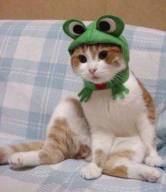 tricô para cães e gatos - Pesquisa Google