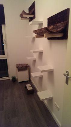 Mijn katten paradijs Cat Habitat, Foster Cat, Cat Shelves, Cat Room, British Shorthair, Cat Tree, Litter Box, Cat Stuff, Bourbon