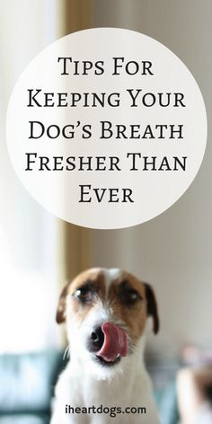 Keep doggy's breath nice and fresh with these great tips!