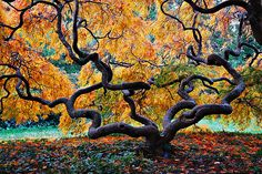 the changing leaves are like soft hands around this spindly, strong trunk. i would love to cradle myself in its arms