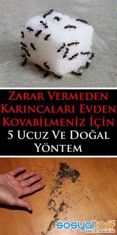 #karınca #haşere #temizlik #pratikbilgiler