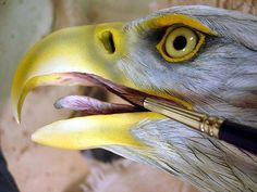 Jim Robison - Wings In Wood Wildfowl Sculptures Exotic Birds, Colorful Birds, Fish Wood Carving, Wood Carvings, Bird Barn, Barn Owls, Eagle Pictures, Flamingo Bird, Wooden Bird