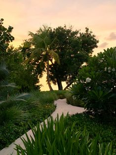 Our garden is a large part of Calabash. Here you will not only find balance and tranquillity but there is also a lot to discover. Jermaine is a great guide and will give you a great tour. Beautiful Islands, Caribbean, Beach House, Most Beautiful, Sidewalk, Aesthetics, Tours, Day, Garden