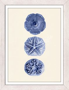 Wall decor poster Jellyfish Cistoidea 06 in blue  by seasideprints