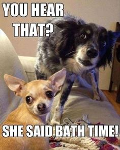 Are you ready to laugh at some of the most hilarious dog memes that the internet has to offer? From clean to cute to downright hilarious, we've gathered a little bit of everything! Here for enjoyment are Dog memes that will make your day! Funny Animal Quotes, Cute Funny Animals, Funny Animal Pictures, Funny Cute, Dog Pictures, Funniest Animals, Animal Humor, Animal Pics, Funny Dog Memes