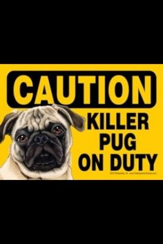Killer pugs •••• now that's an oxymoron ☻  ~S #Pugs #Funny