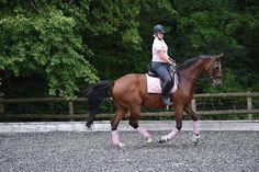 Roosa's Horsey Life: PS of Sweden lush saddle pad review Saddle Pads, Sweden, Equestrian, Lush, Horses, Animals, Animais, Animales, Animaux