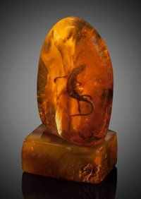 Baltic Amber with Lizard Inclusion Eocene Ukraine