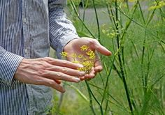 The edible ecology of weeds