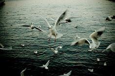 #just #sea