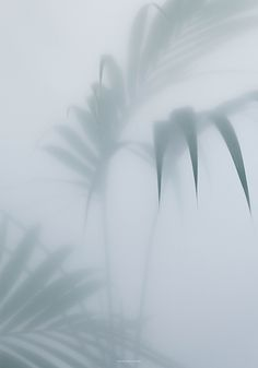 Botanic postcard with palm tree leaves photographed in the mist by Kristina Dam Studio. Wallpapers Tumblr, 3d Max Vray, Foto Poster, Poster Poster, Plakat Design, No Rain, Arte Floral, Jolie Photo, White Aesthetic