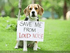 #Here's how you can keep your pets safe this Diwali - Economic Times: Economic Times Here's how you can keep your pets safe this Diwali…