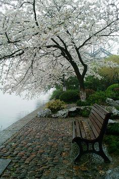 ------------------------------------ My Blogger Blog : Home & Garden...