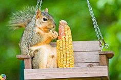 Some of these for the squirrels might make the squirrels leave the bird feeders alone