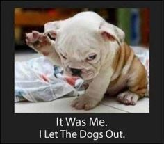 Who Let The Dogs Out...