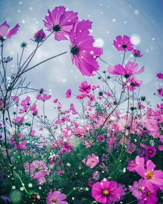 Little Flowers, Wild Flowers, Beautiful Flowers, Cosmos, Flower Names, Rose Pictures, Backyard Garden Design, Art Background, Flower Seeds