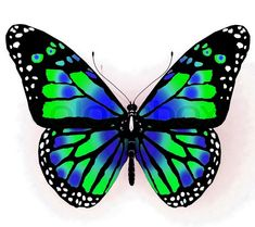 Stock photo ✓ 10 M images ✓ High quality images for web & print | Isolated butterflyof bright color on a white background