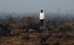 Widodo stands on an area of peatland that has recently been cleared to make way for a palm oil plantation: a symbol of how his country has been ravaged by the palm oil industry.