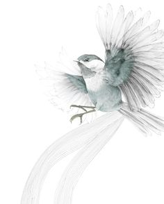Bird in flight print by Beth Emily... I would love a hummingbird that looks sketched on!