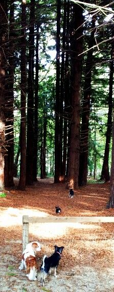 Redwood Grove, the Presidio, San Francisco, California