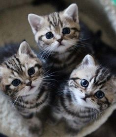 Please feed us or we stealz your brains....