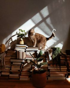 thesill: All I need in this life of sin.plants, books and cats. Photo by - All For Gardening Light And Shadow, Poses, Cat Love, Cats And Kittens, Cute Cats, Fur Babies, Dog Cat, Cute Animals, Pictures
