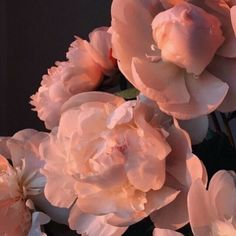 59 ideas for aesthetic photography nature red Peach Aesthetic, Flower Aesthetic, Aesthetic Photo, Aesthetic Pictures, Pretty In Pink, Beautiful Flowers, Arte Fashion, No Rain, Aesthetic Wallpapers
