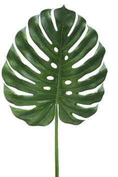 CFD : Catalog > PLANTS/GREENERY > Tropical Greenery Leaf Wall Art, Leaf Art, Tropical Art, Tropical Leaves, Plant Illustration, Botanical Illustration, Green Wall Decor, Plant Wallpaper, Plant Aesthetic