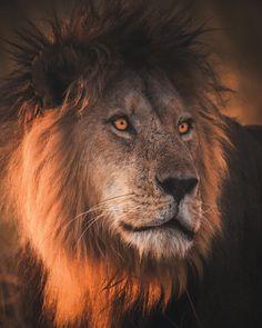 58.7 тыс. отметок «Нравится», 288 комментариев — Wildlife Planet (@wildlifeplanet) в Instagram: «Hello everyone, it's @burakdogansoysal again. I'm taking over @wildlifeplanet today and here is my…»