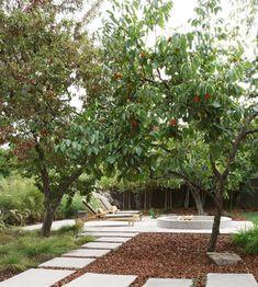 Persimmon Tree Desig