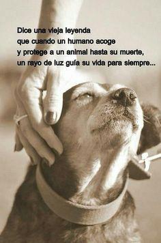 me gustaría tener un refugio para perros soy 100% defensora del maltrato animal