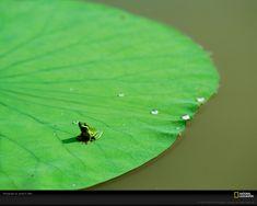 frog :) Natgeo
