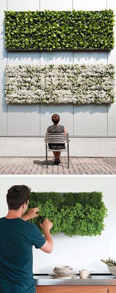 modular indoor & outdoor green wall - Karoo Brilliant for herbs!