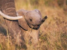 Cute Baby Elephant Please Follow: +Nature Photobook