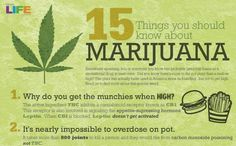15 Things Everyone Should Know About Marijuana - Higher Perspective