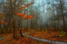 walking in the autumn forest - LOOK ON THE DARK BACKGROUND!