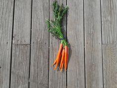Grocery Store Gardening:  Carrot